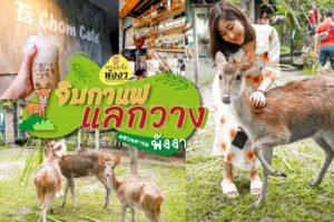 สวนตาชม จิบกาแฟ แลกวาง ท้ายช้าง เมืองพังงา – Ta Chom Cafe & Deer sighting Tai chang, Phangnga