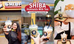 Shiba Hokkaido Milk Tea เมืองภูเก็ต