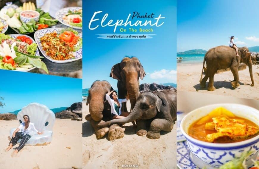 Phuket Elephant on the Beach คาเฟ่ป่าตอง ภูเก็ต