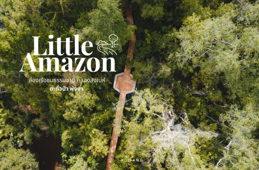 คลองสังเน่ห์ The Little Amazon ตะกั่วป่า พังงา